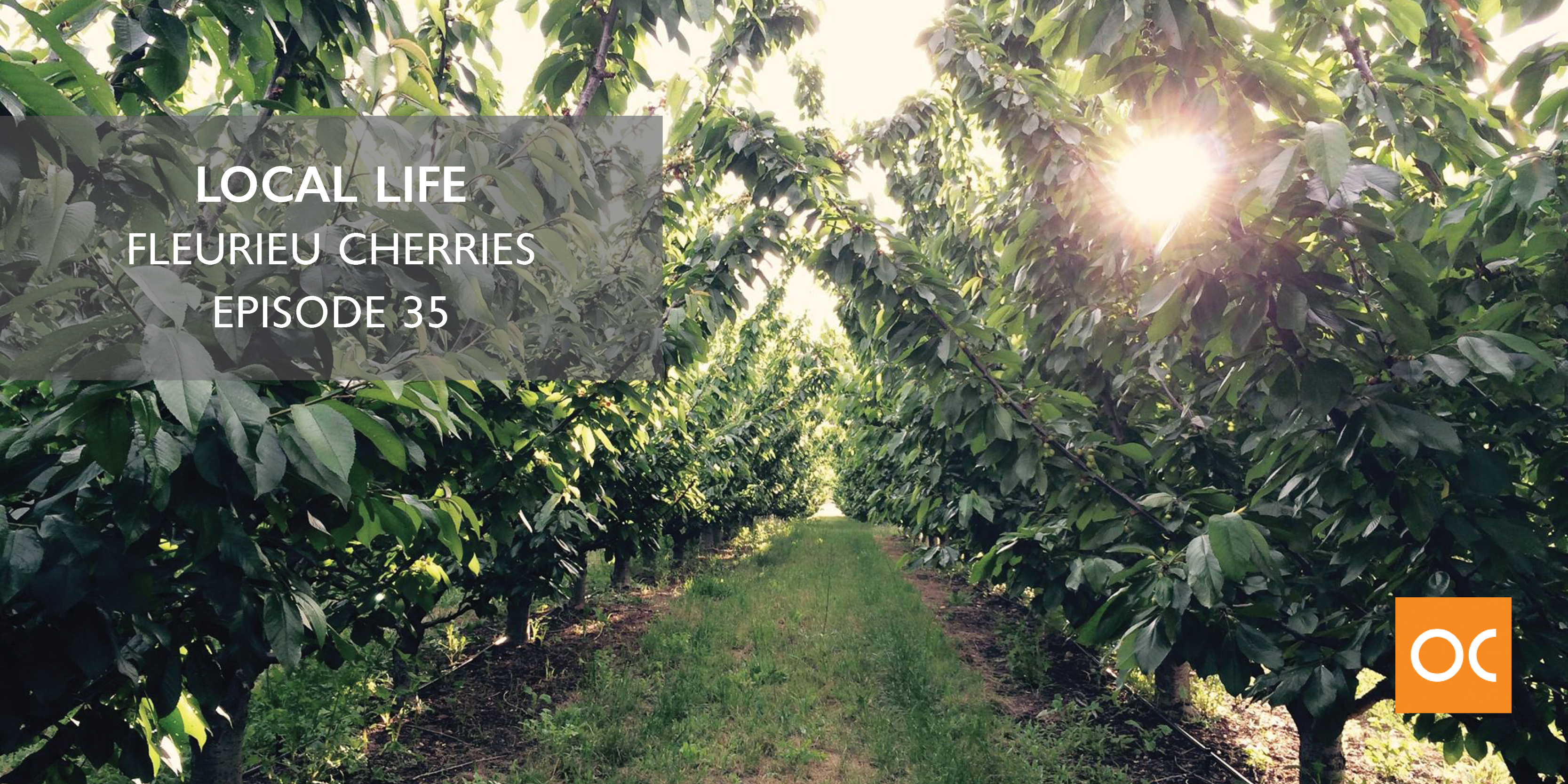 Local Life - Blog feature image Fleurieu Cherries Ep 35